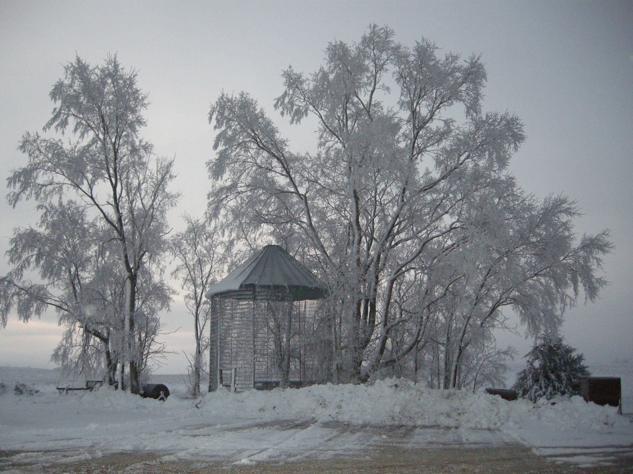 Wordless wednesday frosty trees farm meets fork