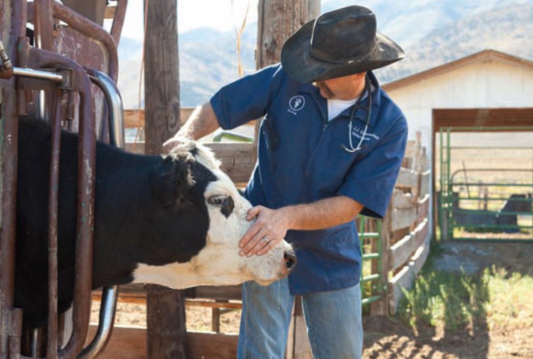 FDA Guidance on Antibiotic Use and Veterinary Feed ...
