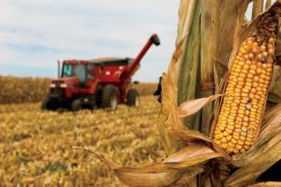 Corn harvest in Illinois - September