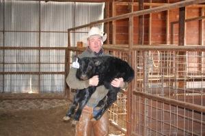 Rancher holding calf