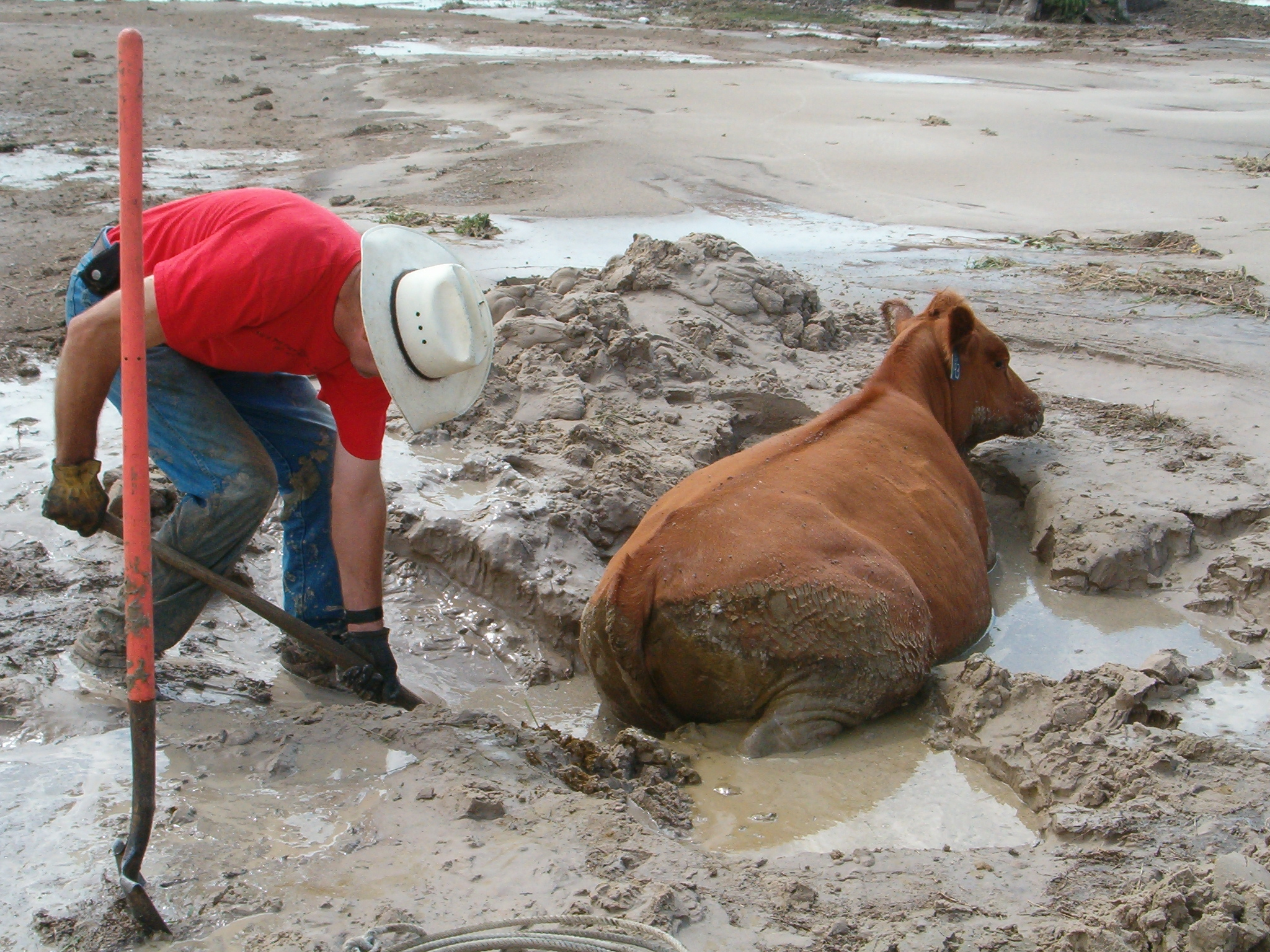 Stuck in the mud pictures