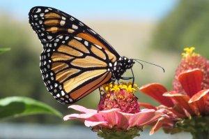 Dubs, Alice - Summer Beauty - Sheridan County