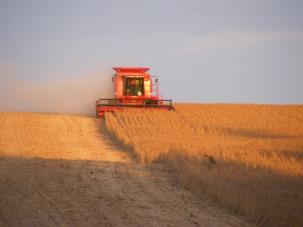 Wilhelm, Thomas - Bean Harvest of 2011 - Richardson County