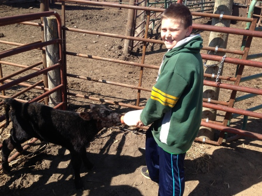 feeding bucket calves