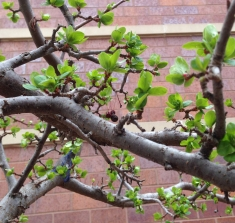 spring is budding