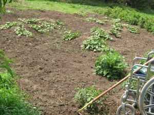 Neddenriep, Shirley - Gardening - Nemaha County