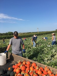 Pg 10 - 2018 Picking Pumpkins