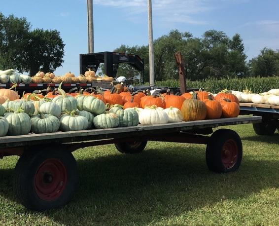 Pg 10 - Pumpkin varieties