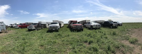 Allie cattle trailers