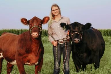 Brittani cattle