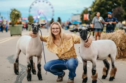 Brittani sheep